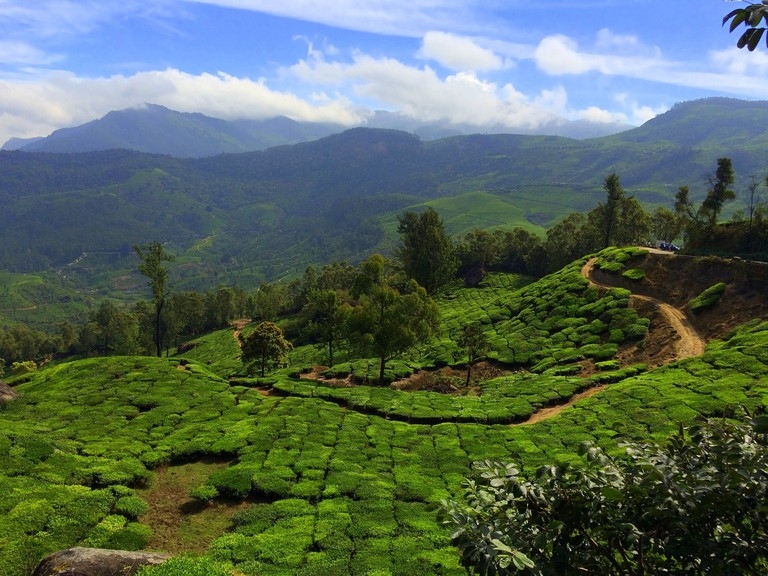 Munnar's endless green fields will drain out all your stress