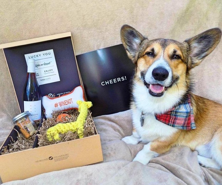 Pinot for Paws Gift Box