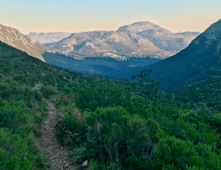 Upper reaches of the Orange Kloof forest