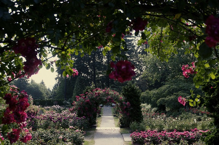Portland's Rose Garden