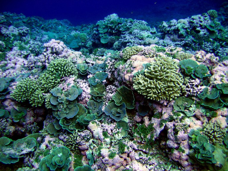 Don't let your sunscreen kill the coral