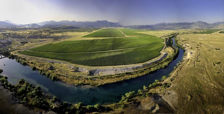 Cemovsko Polje, Plantaze Vineyard