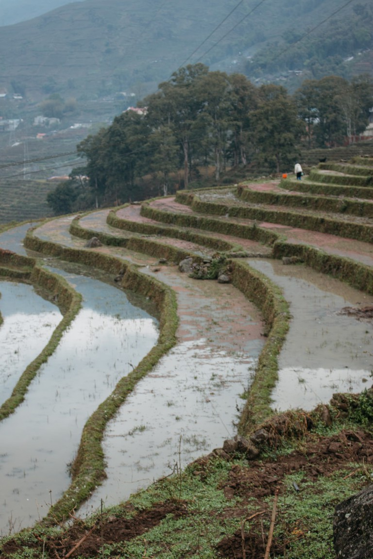 SCTP0075-PHAM-VIETNAM-LAOCAI-SAPA_HUMANS_RICETERRACES_0875