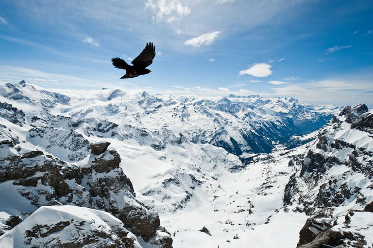 Flying high on Mount Titlis