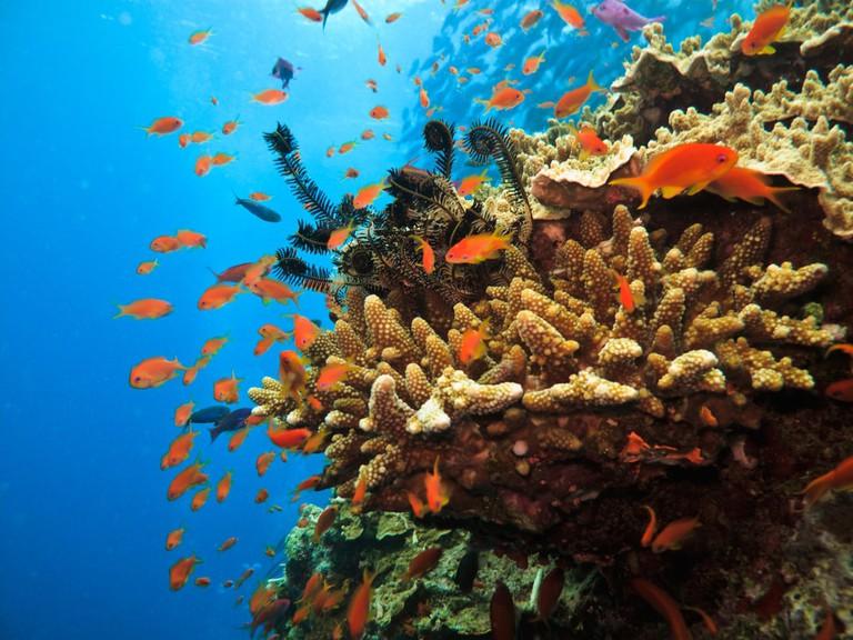 Schools of fish, Great Barrier Reef