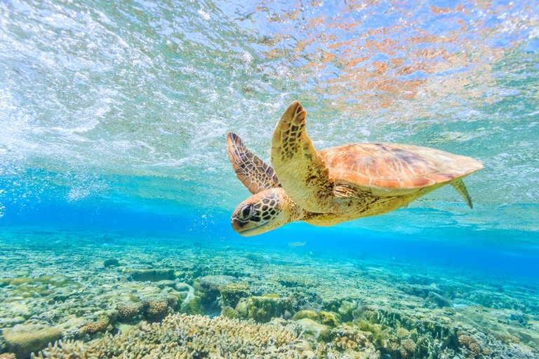 Turtle Diving, the Great Barrier Reef