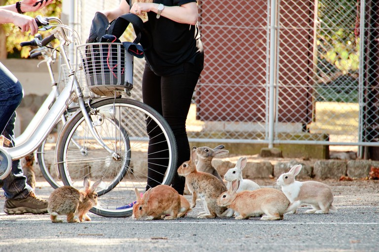 Tame and hungry bunnies rule the island of Okunoshima