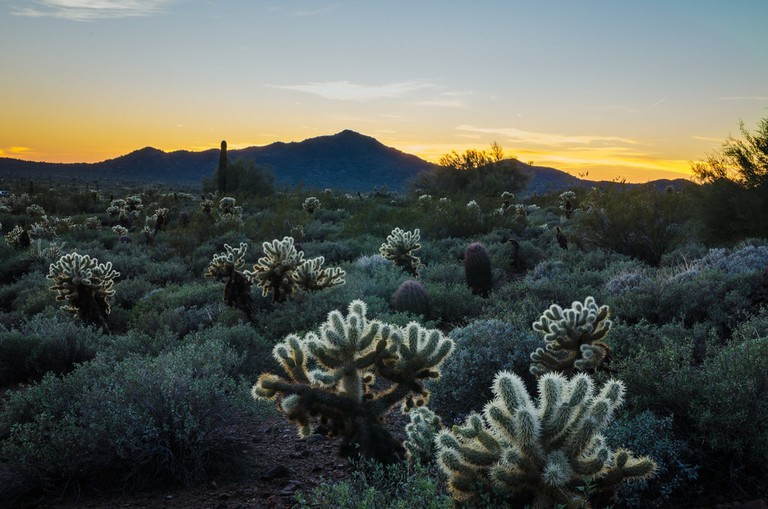 Sonoran Desert   © Jeff Shewan / Flickr