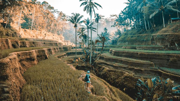 Terrazas de arroz de Tegallalang, Indonesia