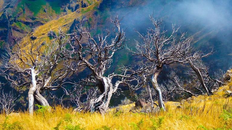 tree-2746168_1280