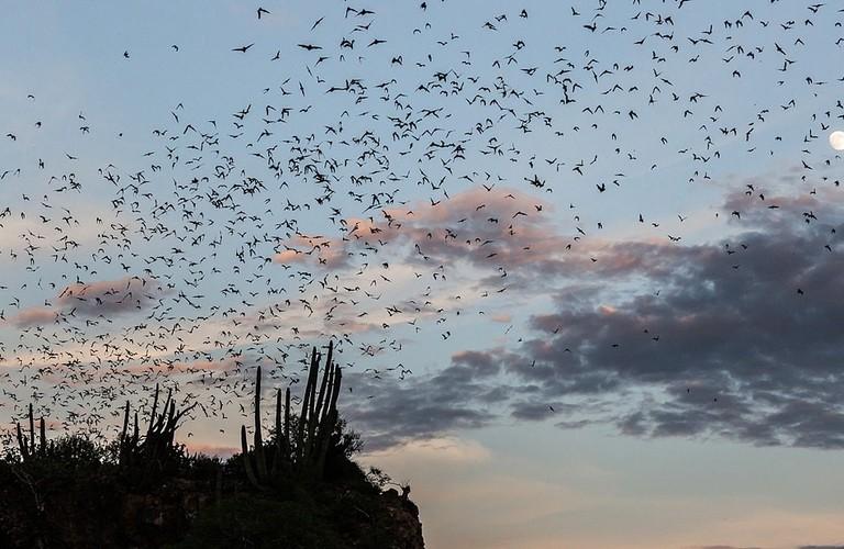1024px-Bat_cave_in_El_Maviri_Sinaloa_-_Mexico