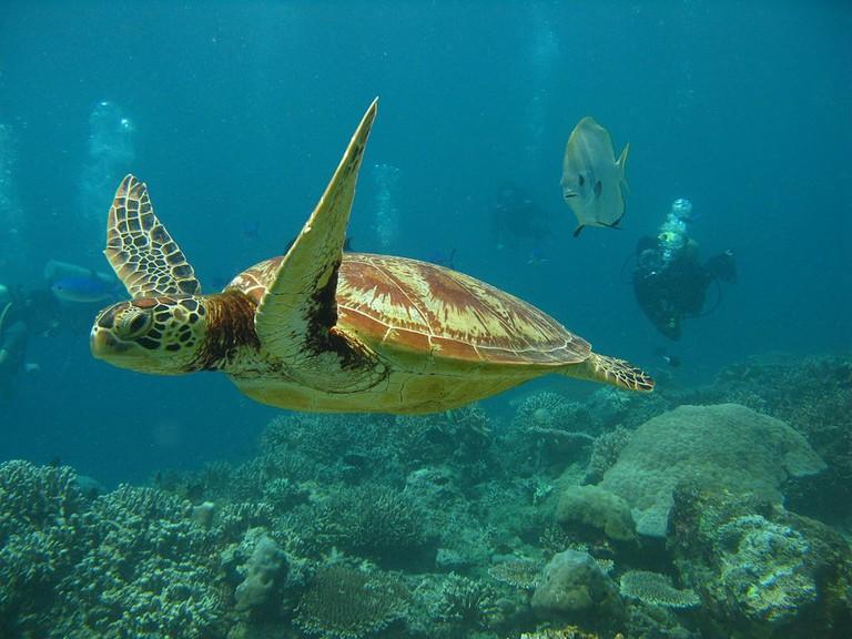 1024px-Underwater_turtle