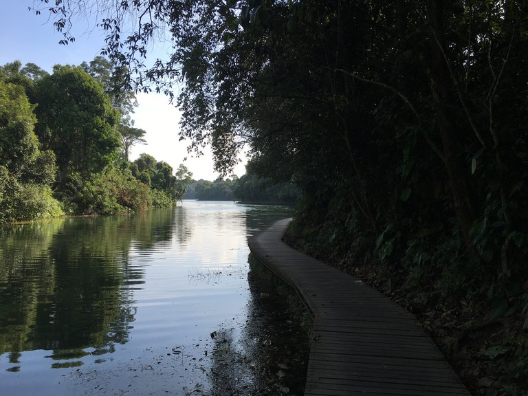 Bask in the tranquility of MacRitchie Reservoir