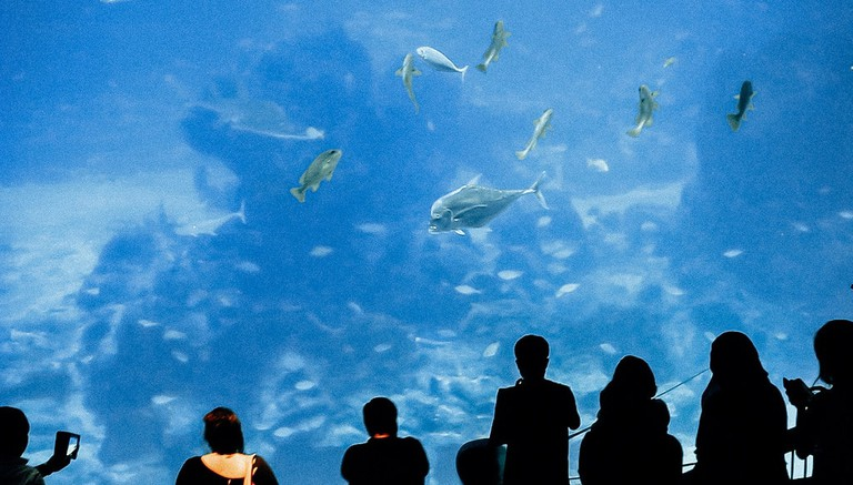 S.E.A Aquarium's massive viewing gallery