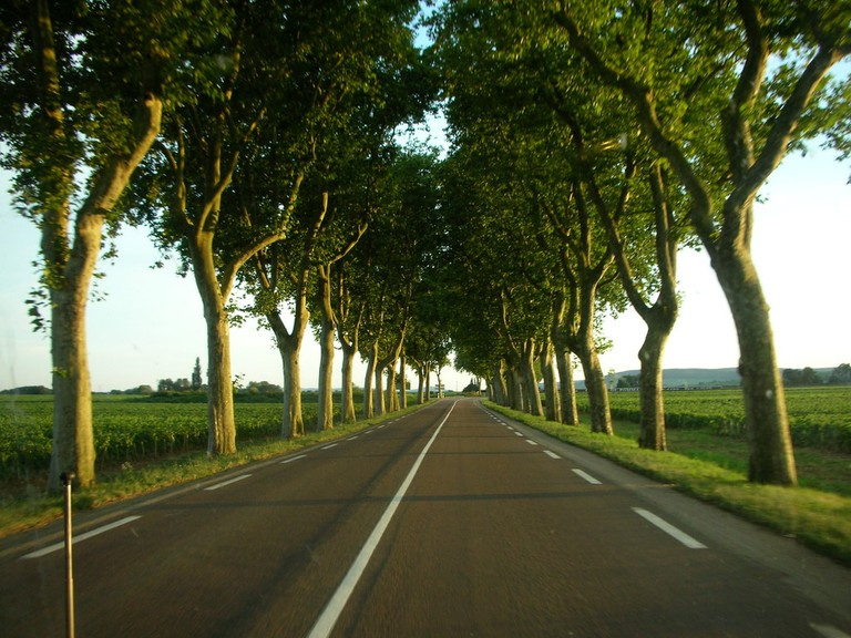 A tree-lined road in France