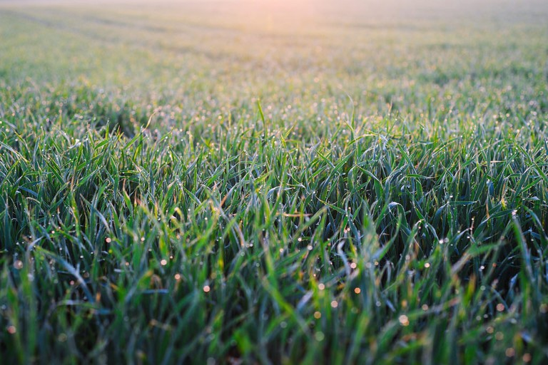 Morning Dew | © Christoph Wurst / Flickr