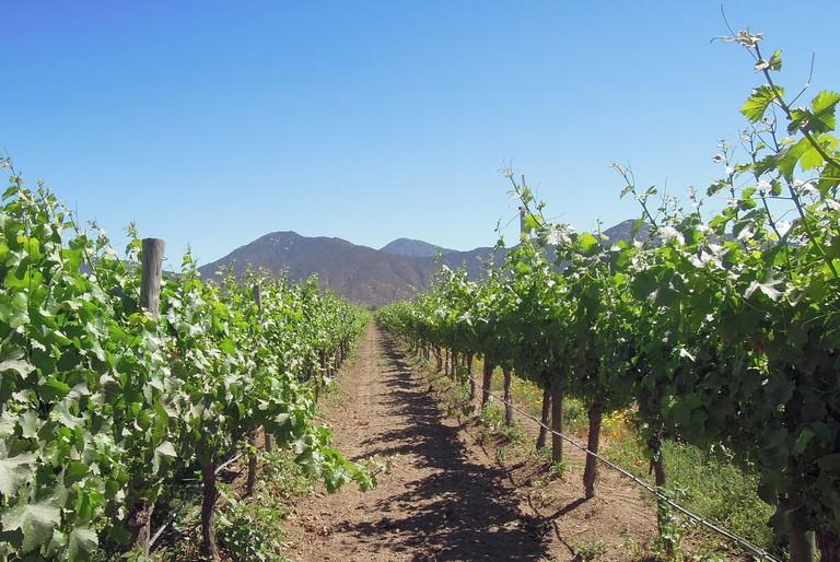 Valparaiso Vineyard