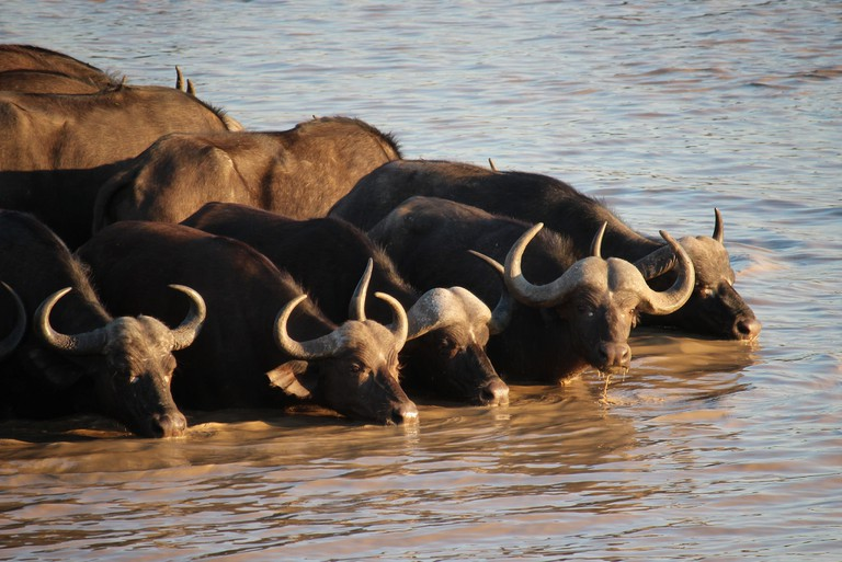 Herd animals | © Christian Keller/Flickr