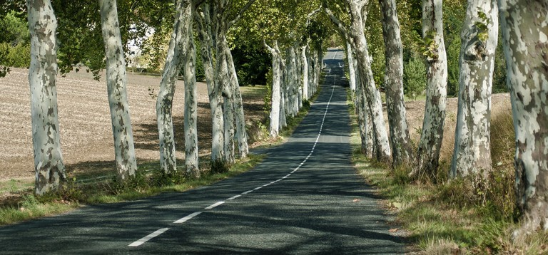 France is famous for its iconic tree-lined roads