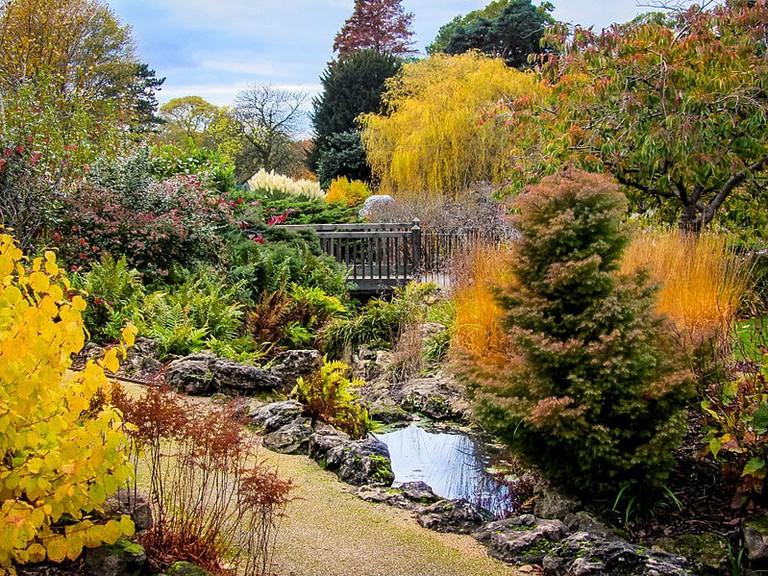 Golders Hill Park   © Wikimedia Commons