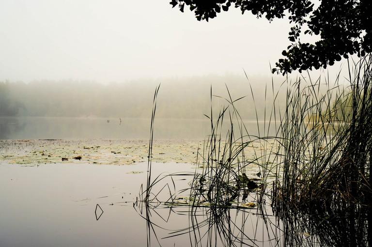 Judarskogens Naturreservat is an oasis just outside the city center