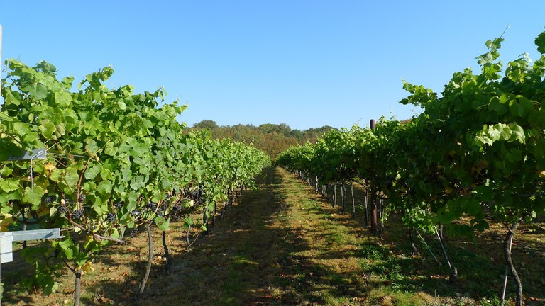 Biddenden Vineyard, Kent