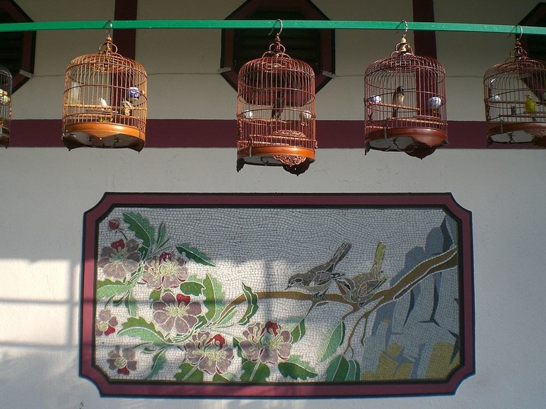 Bird walk China 2