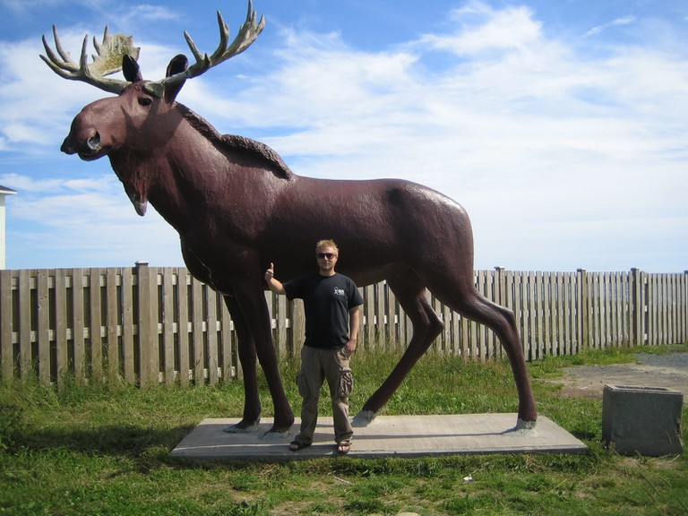 Cow Bay Moose Flikr