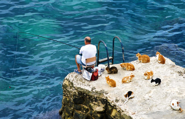 Stray cats befriend a local fisherman, Valletta, Malta