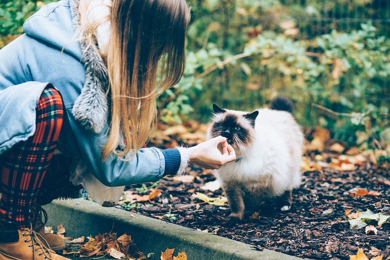 Woman feeding a cat
