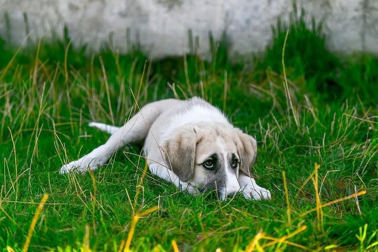 Help a stray puppy │