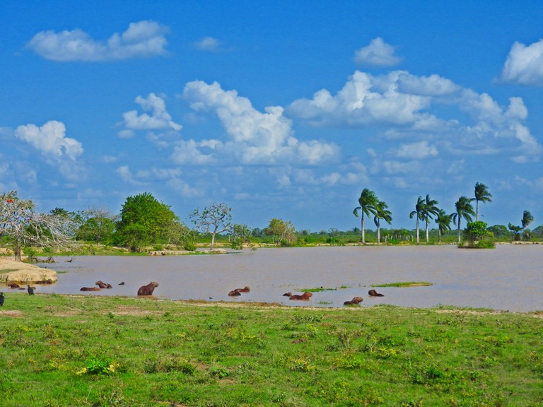 The Colombian Eastern Plains