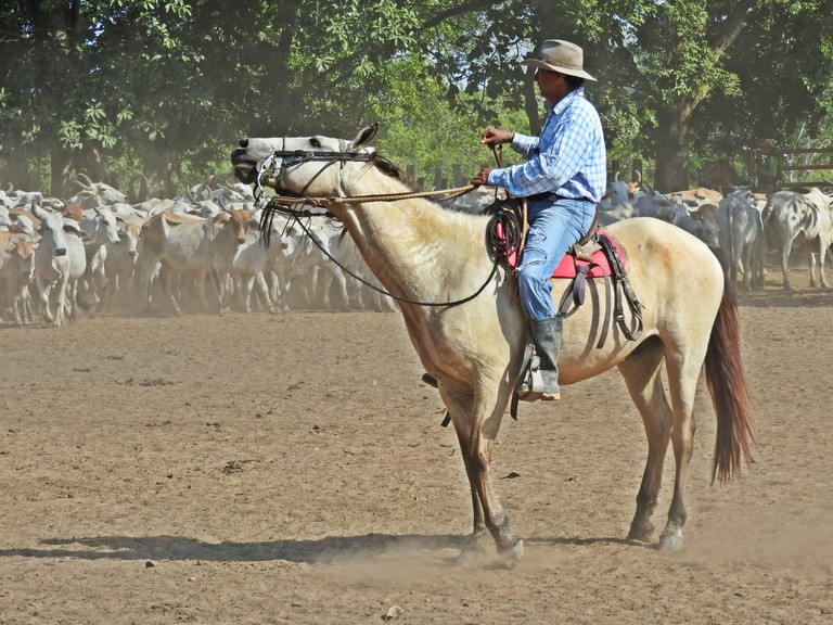 A Colombian cowboy in the llanos