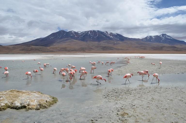 Flamingos love the flats
