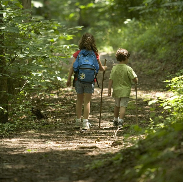 Children walking in the forest