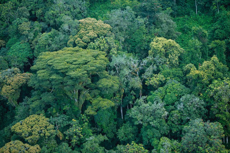 The mature forest of the western valleys in Nyungwe National Park | Courtesy of Gaël R. Vande weghe and Philippe Nyirimihigo