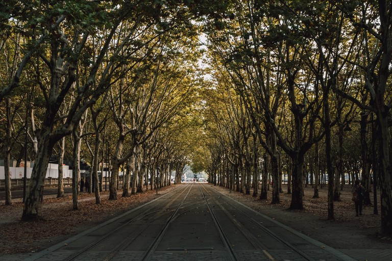 A tree-lined road in Bordeaux, France