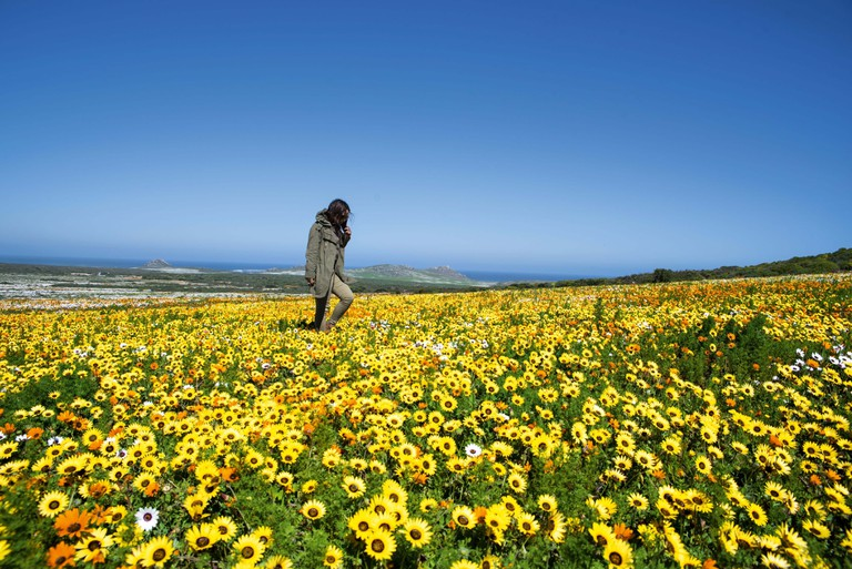Woman walking through a field of flowers in the West Coast National Park