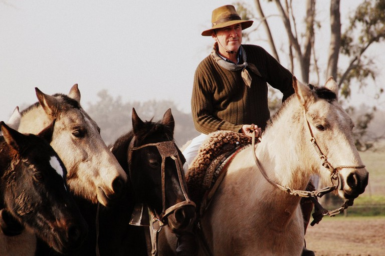 A gaucho and his horses