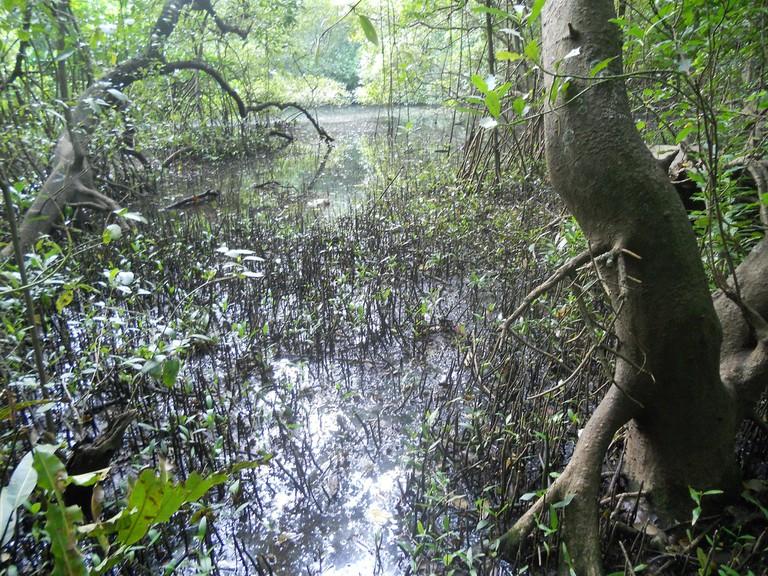 Managalavanam is often regarded as the 'green lung of Kochi'