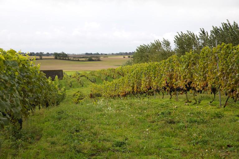 miriam_preis-winery-4356