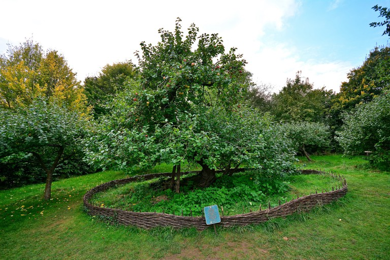 Newton's Apple Tree, Woolsthorpe Manor