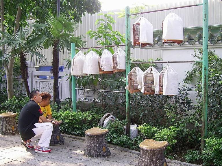 Pet bird walking China 1