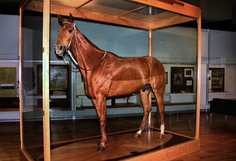 Phar Lap mounted in the Melbourne Museum