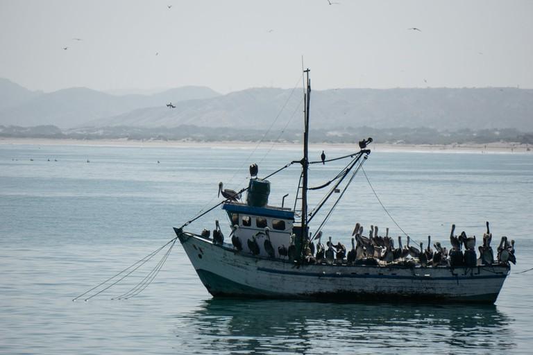 Pelicans on a ship, Mancora, Peru