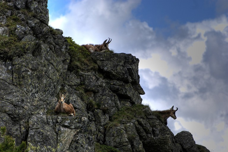 Unclimbable cliffside? Not a problem for these guys