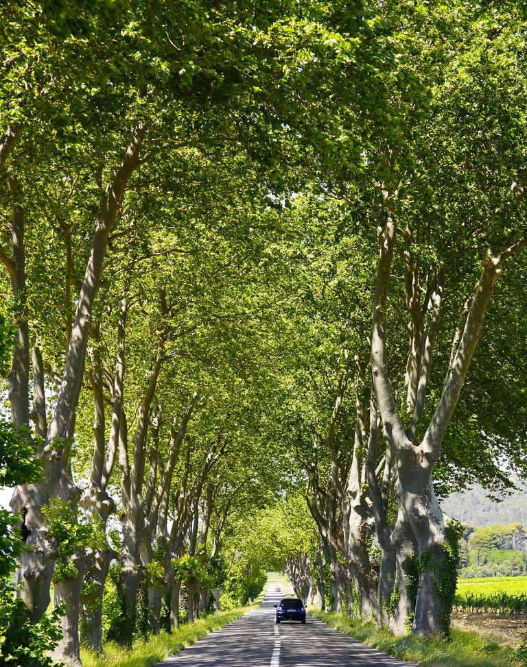 A typical tree-lined road in France