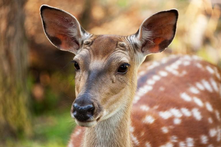 Wildlife, India