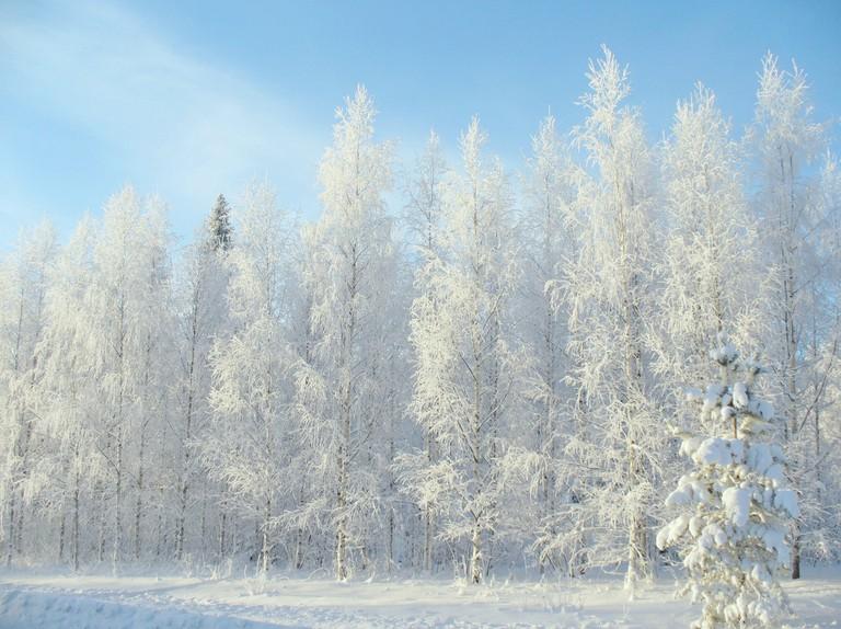 Finnish forest in winter