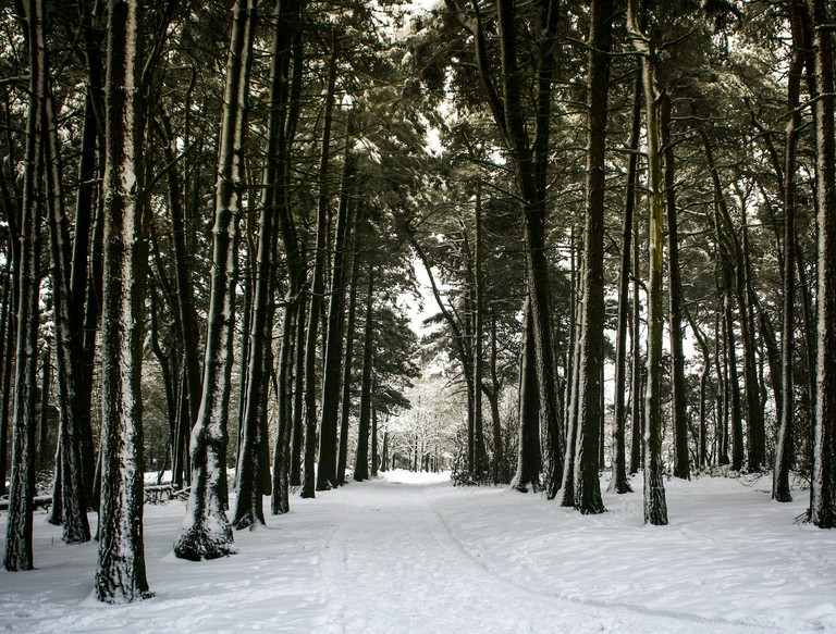 Winter in the Lickey Hills